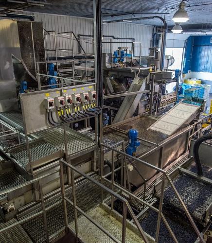 Bleuets Mistassini production